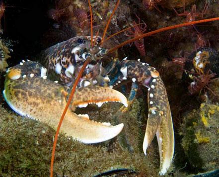scuba diver venice diving