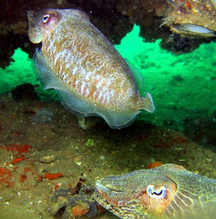 rescue diver venice