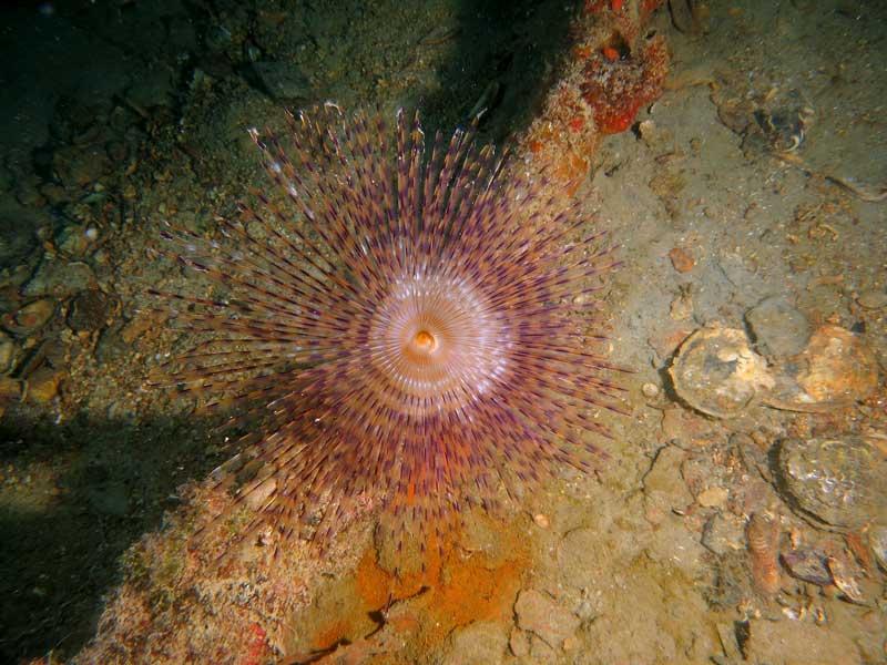 vila wreck diving venezia