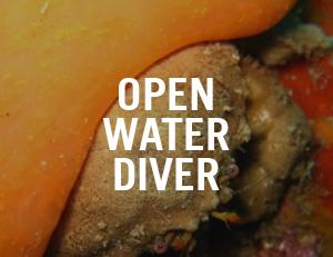 open water diver venice
