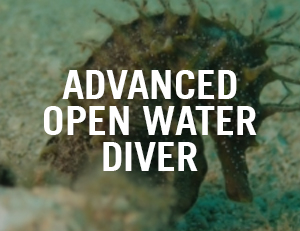 Advanced Open Water Venice