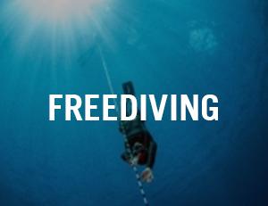 freediving venice