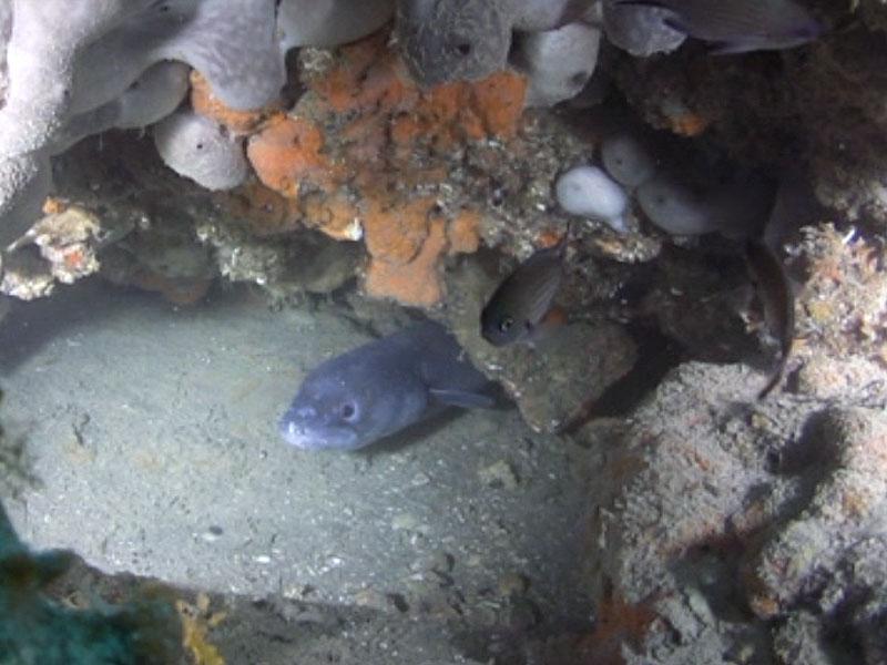 wreck diving immersioni venezia