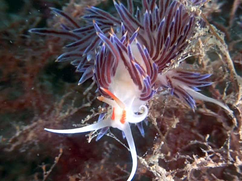 nudibranco immersioni relitti venezia