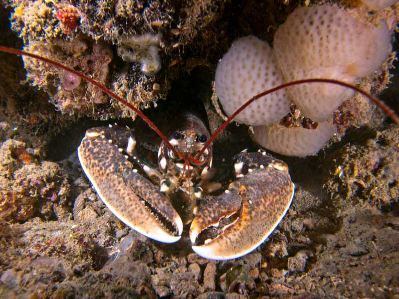 wreck diving venice Wracktauchen